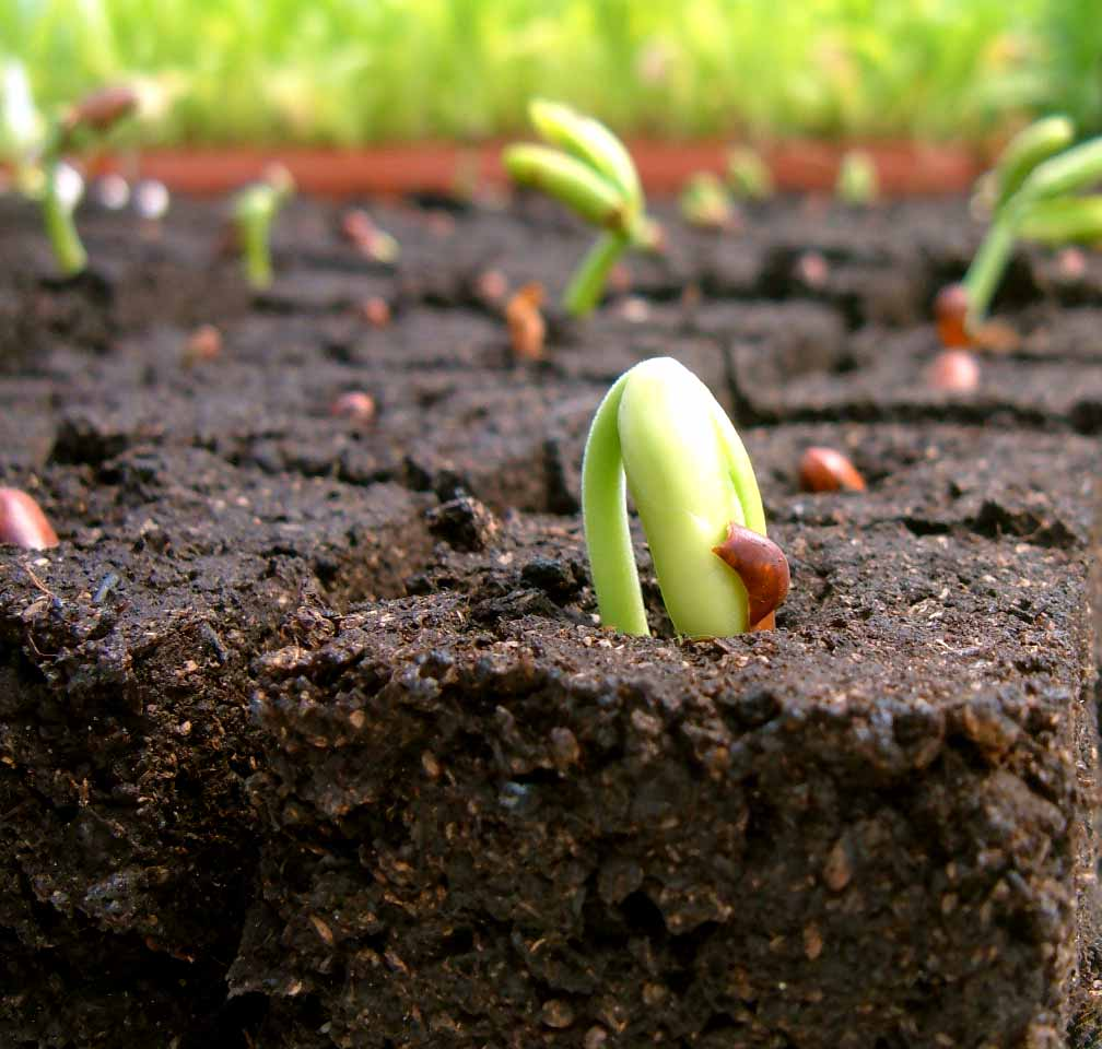 Growing for What does soil